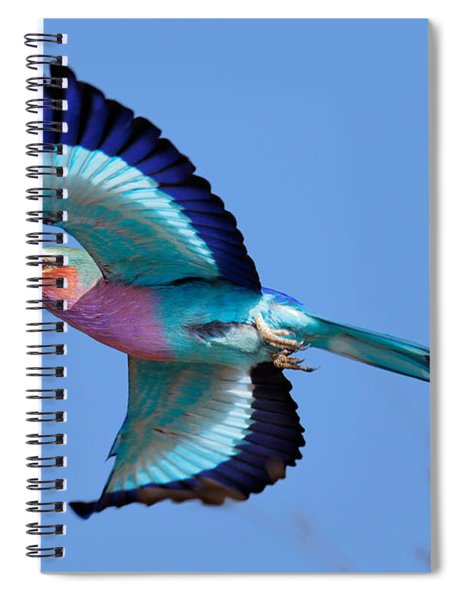 Lilac-breasted Roller In Flight Spiral Notebook