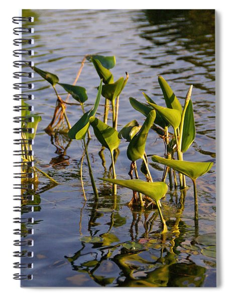 Lillies In Evening Glory Spiral Notebook