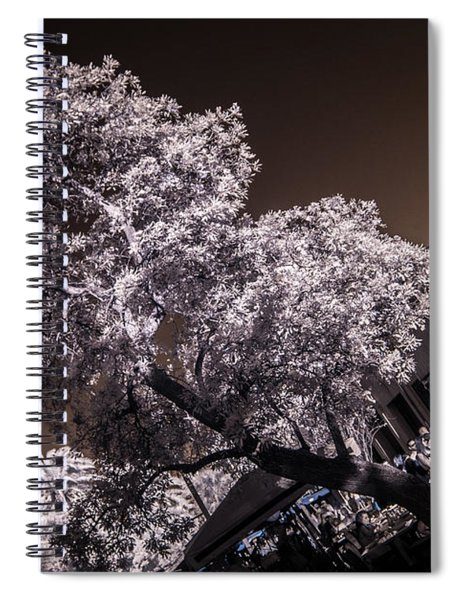 Lincoln Road Tree Spiral Notebook