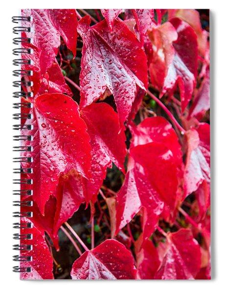 Linne Color Spiral Notebook