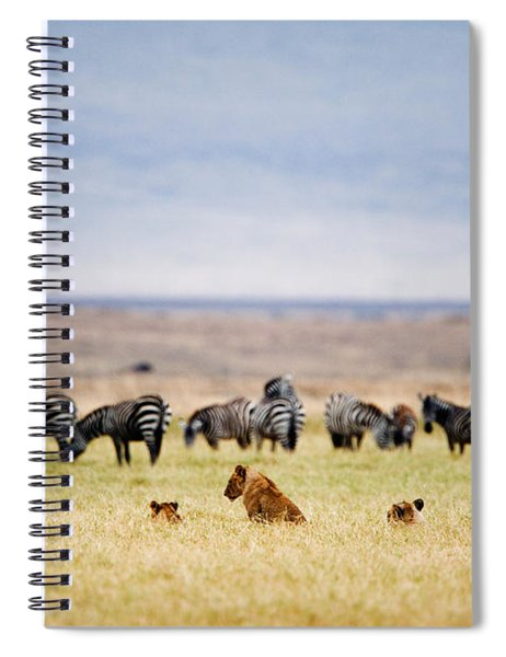 Lion Family Panthera Leo Looking Spiral Notebook