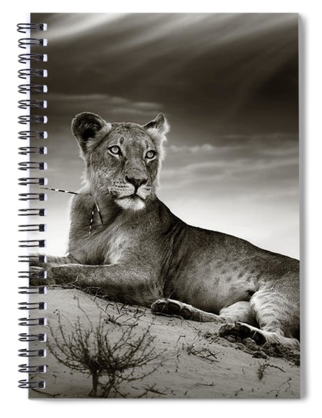 Lioness On Desert Dune Spiral Notebook