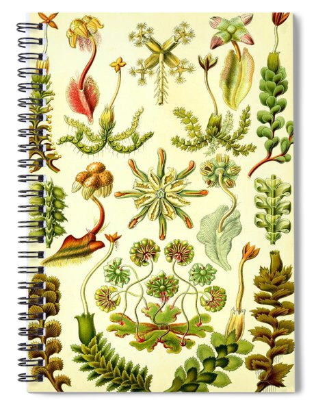 Spiral Notebook featuring the digital art Liverworts Moss Brunnenlebermoos Haeckel Hepaticae by Movie Poster Prints