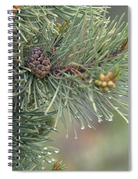 Lodge Pole Pine In The Fog Spiral Notebook