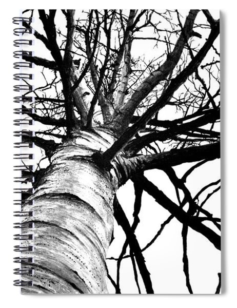 Lone Birch Spiral Notebook
