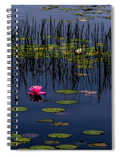 Lone Pink Water Lily  Spiral Notebook