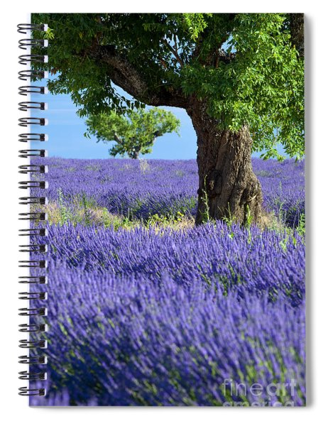 Spiral Notebook featuring the photograph Lone Tree In Lavender by Brian Jannsen