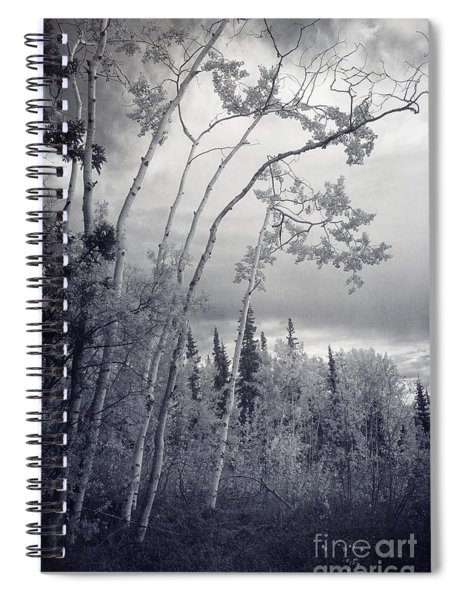 Lonesome Woods Spiral Notebook