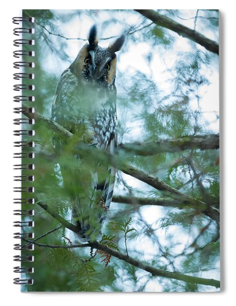 Long-eared Owl 1 Spiral Notebook