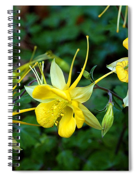 Longspur Columbine At Cattail Falls Spiral Notebook