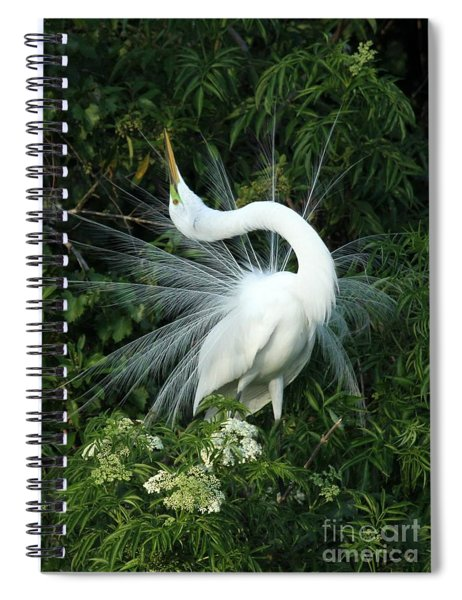 Look At Me Spiral Notebook
