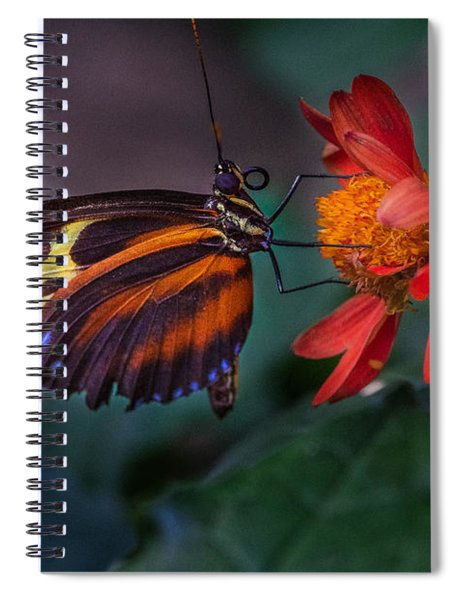 Spiral Notebook featuring the photograph Looking Up  by Garvin Hunter
