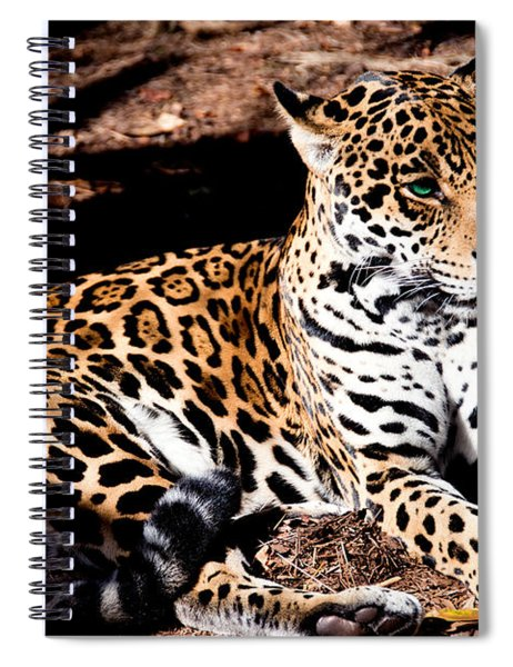 Looks Are Deceiving Spiral Notebook