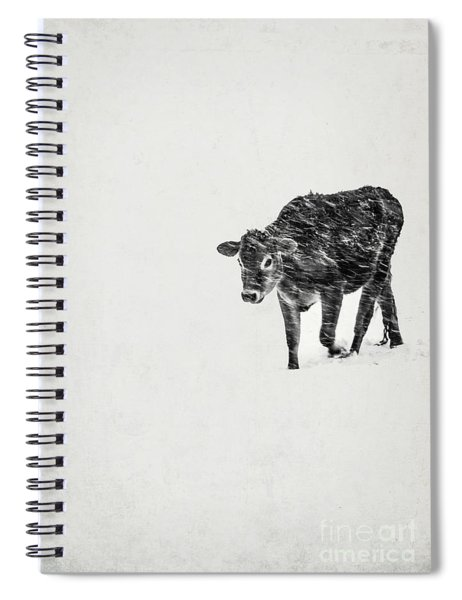 Lost Calf Struggling In A Snow Storm Spiral Notebook