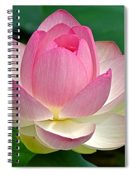 Lotus 7152010 Spiral Notebook