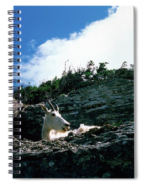 Low Angle View Of Two Mountain Goats Spiral Notebook