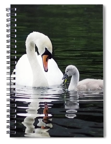 Lunchtime For Swan And Cygnet Spiral Notebook