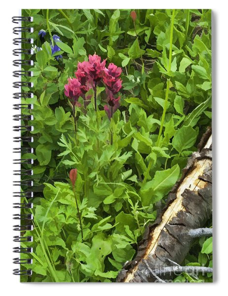 Magenta Paintbrush Spiral Notebook