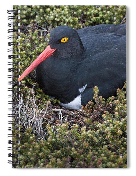 Maglellanic Oystercatcher Spiral Notebook