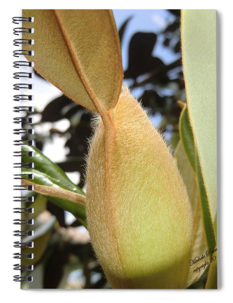 Magnolia Serenity - Signed Spiral Notebook