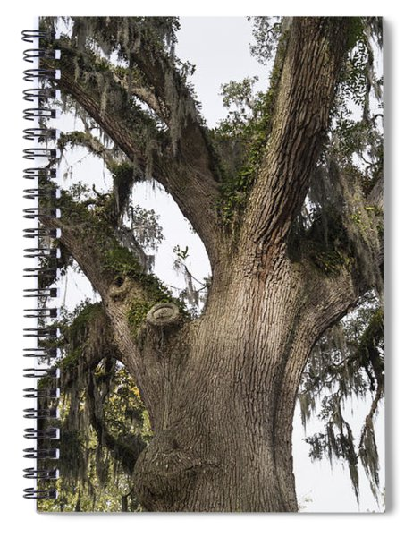 Majestic Live Oak Tree Spiral Notebook
