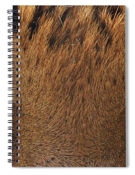 Malayan Tiger Eyes Spiral Notebook