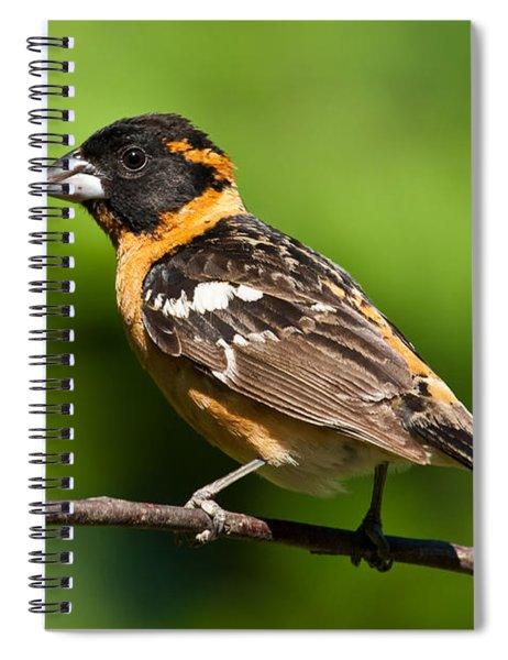 Male Black Headed Grosbeak In A Tree Spiral Notebook