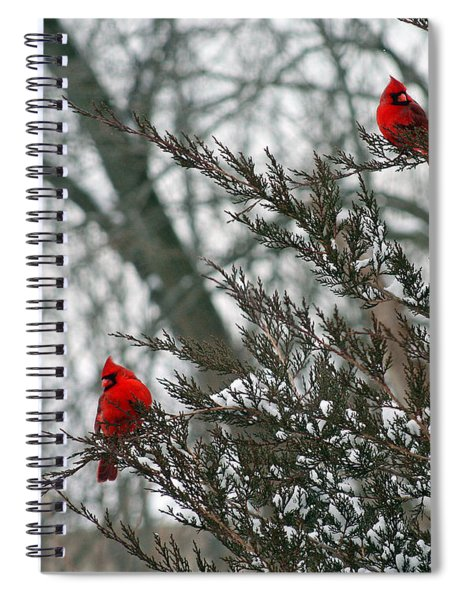 Male Cardinal Pair Spiral Notebook