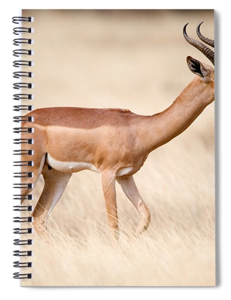 Male Gerenuk Litocranius Walleri Spiral Notebook