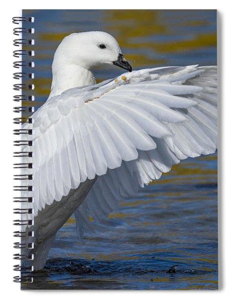 Male Kelp Goose Spiral Notebook