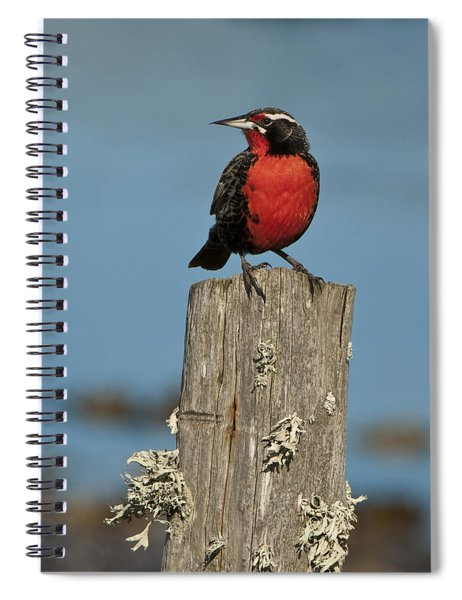 Male Long-tailed Meadowlark On Fencepost Spiral Notebook