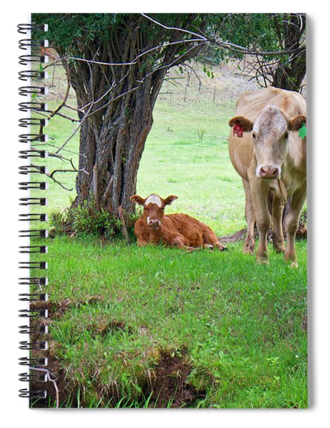 Mama Cow And Calf Spiral Notebook