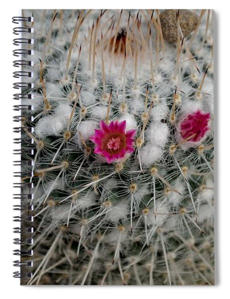 Spiral Notebook featuring the photograph Mammillaria Geminispina by Scott Lyons