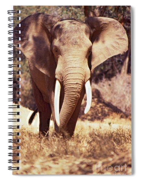 Mana Pools Elephant Spiral Notebook