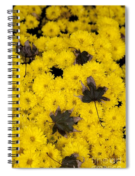 Maple Leaves On Chrysanthemum Spiral Notebook