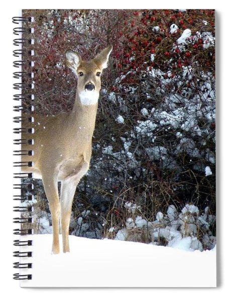 March Snow And A Doe Spiral Notebook