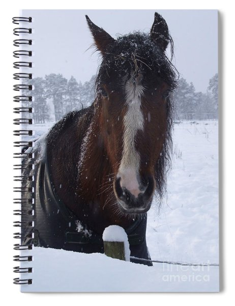 Mare In Snow Spiral Notebook