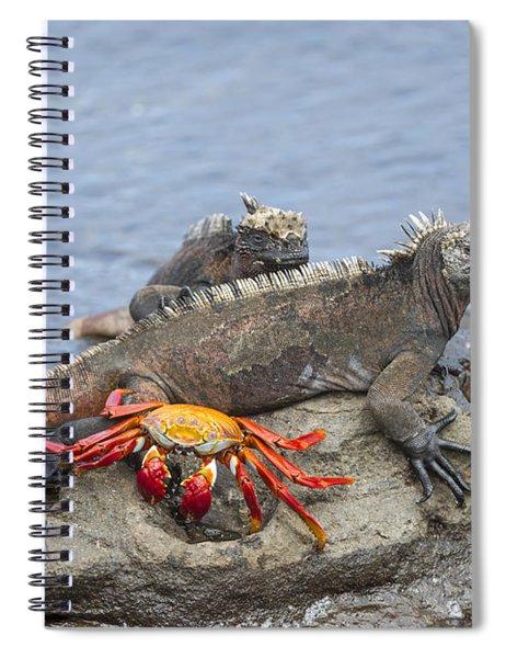 Marine Iguana Pair And Sally Lightfoot Spiral Notebook