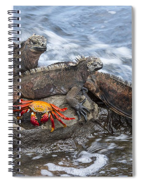 Marine Iguana Trio And Sally Lightfoot Spiral Notebook