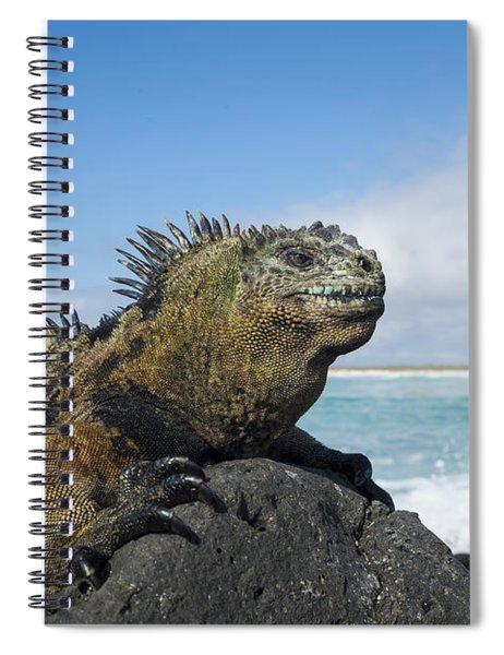 Marine Iguana Turtle Bay Santa Cruz Spiral Notebook