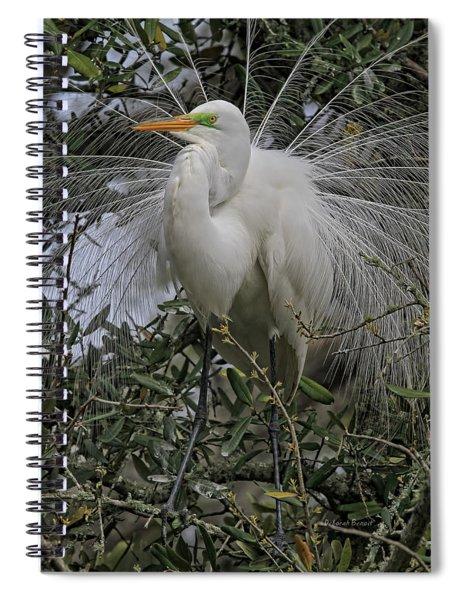 Mating Plumage Spiral Notebook