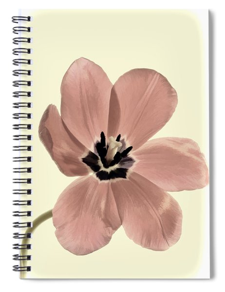 Mauve Tulip Transparency Spiral Notebook
