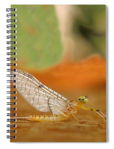 Mayfly Art Spiral Notebook
