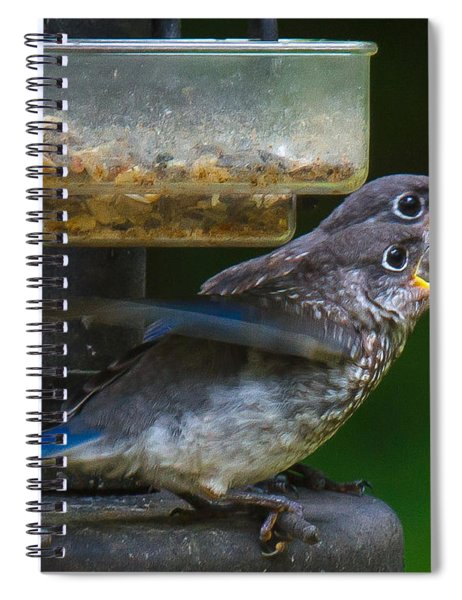 Spiral Notebook featuring the photograph Me First - Me First by Robert L Jackson