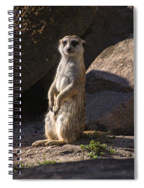 Meerkat Looking Forward Spiral Notebook