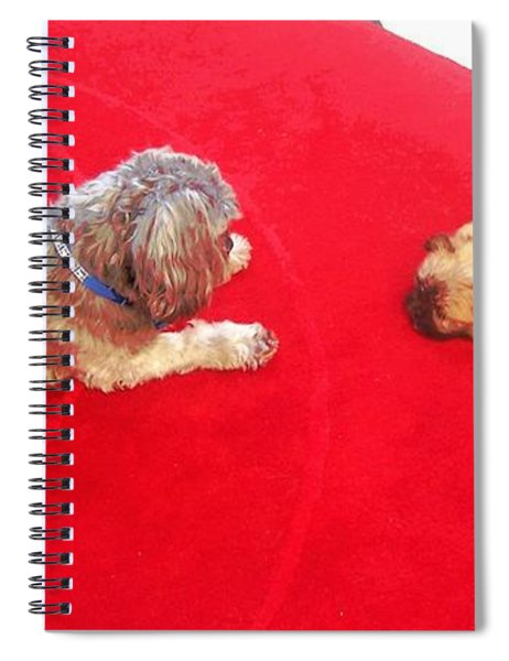 Dog And Puppy Pet Photography Lhasa Apso Shih Tzu Pomeranian   Spiral Notebook by Ai P Nilson