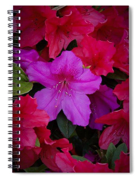 Merging Azaleas 2 Spiral Notebook
