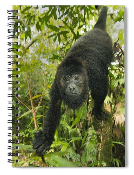Mexican Black Howler Monkey Belize Spiral Notebook