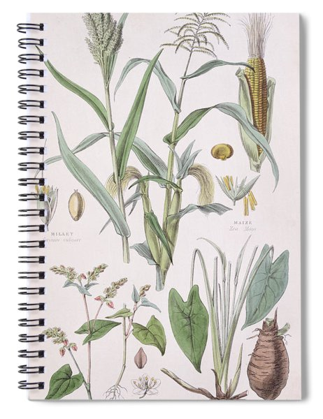 Millet Maize Buckwheat And Taro Spiral Notebook