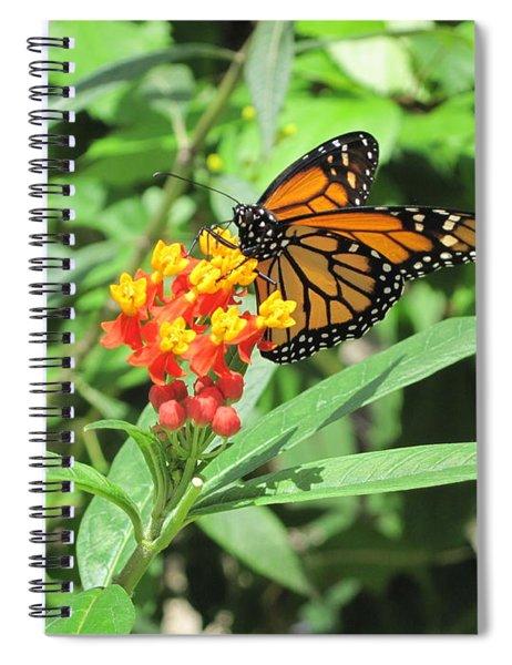 Monarch At Rest Spiral Notebook